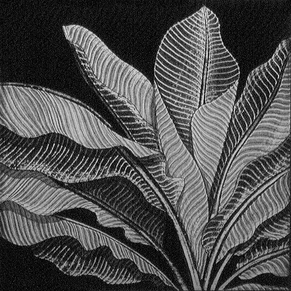 Platanillo, Heliconia, etching