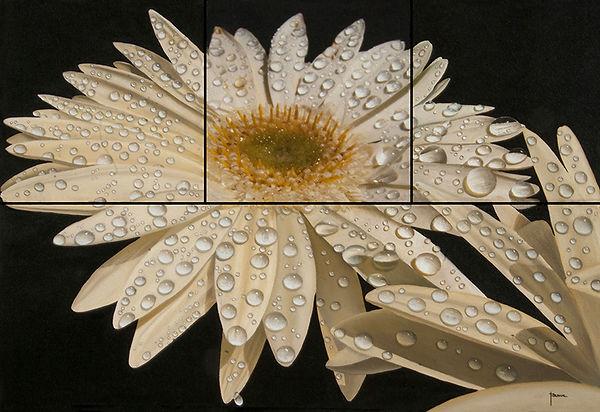Flor blanca con rocio, gotas de agua