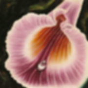 Pink orchid, paintings of nature