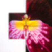 Miltonia, red orchid, mixed media painting
