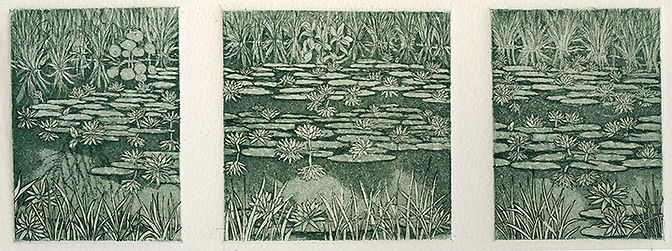 Waterlilies intaglio print etching
