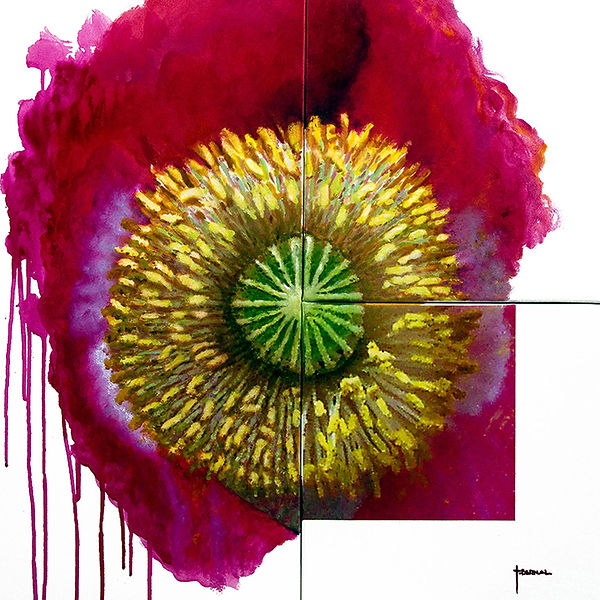 Red flower, wild poppy, paintng