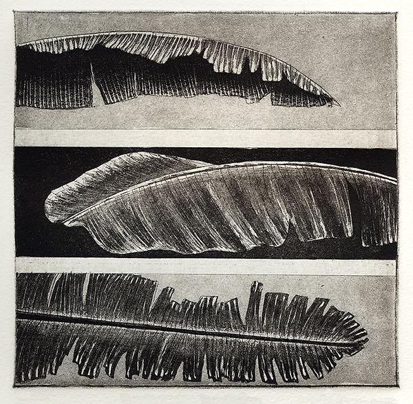 Musa Paradisiaca, etching