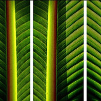 banana-leaves-.jpg