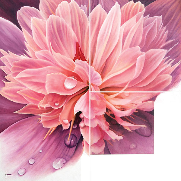 Droplets of water on a peony, pink flower with dew