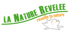 logo-fond-transparent_modifié.png