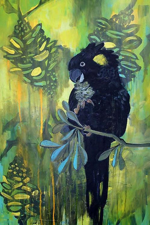 Black Cockatoo Gift Card C6
