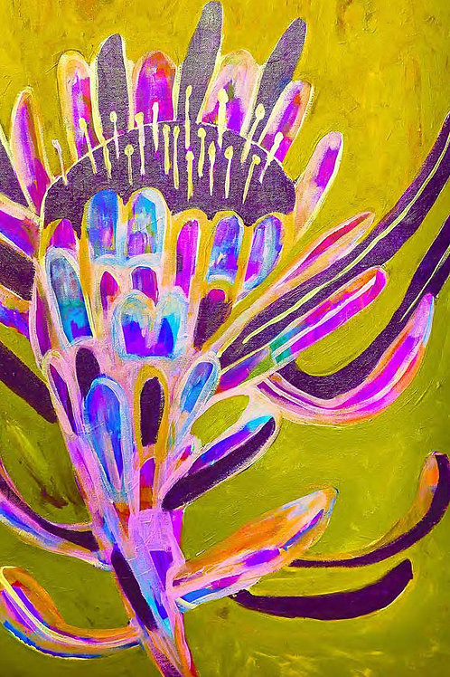 Electric Protea  Gift Card C6