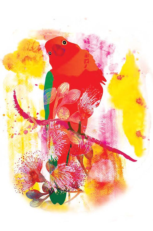 King Parrot  Gift Card C6