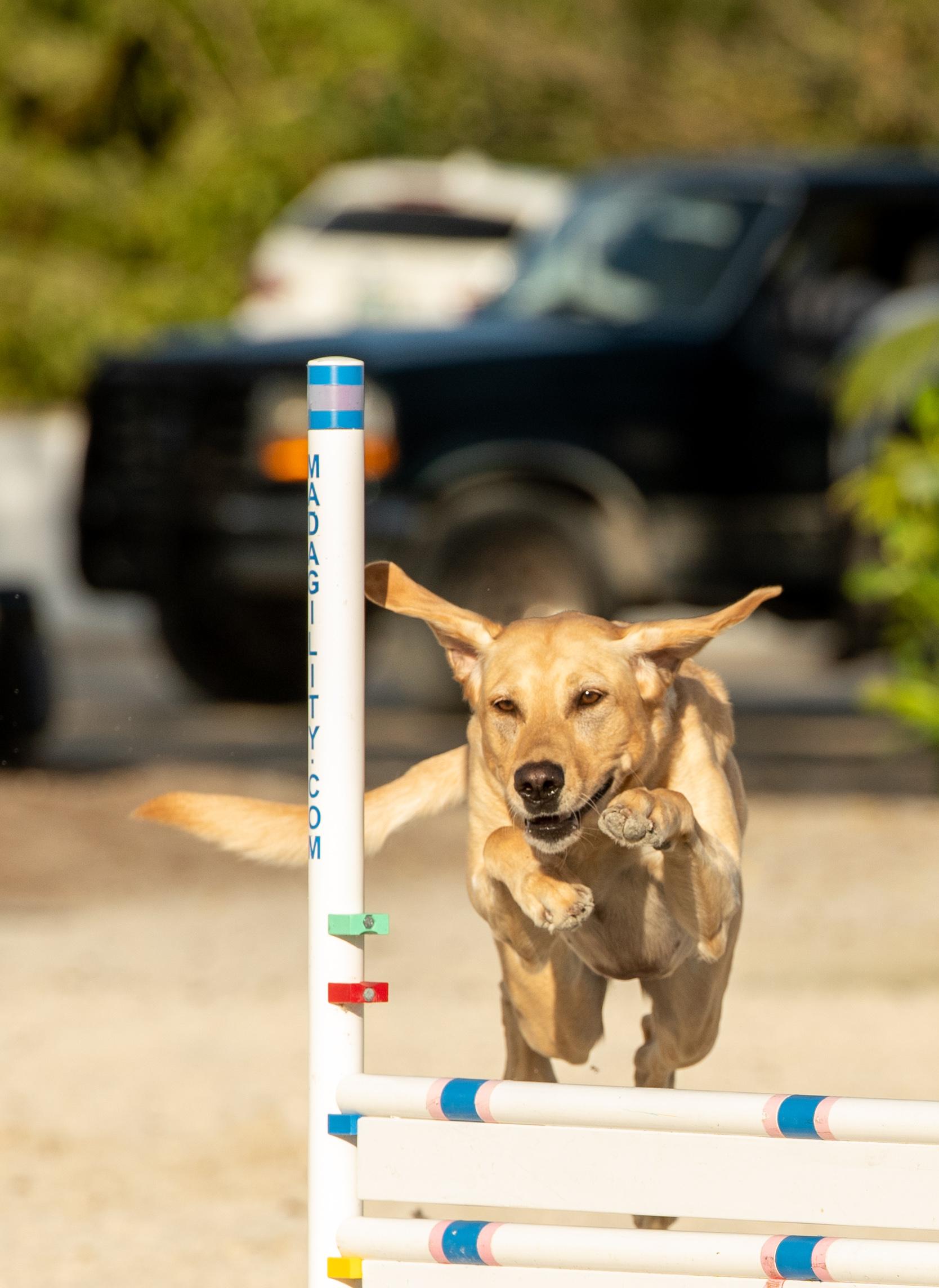 Doggie Olympics