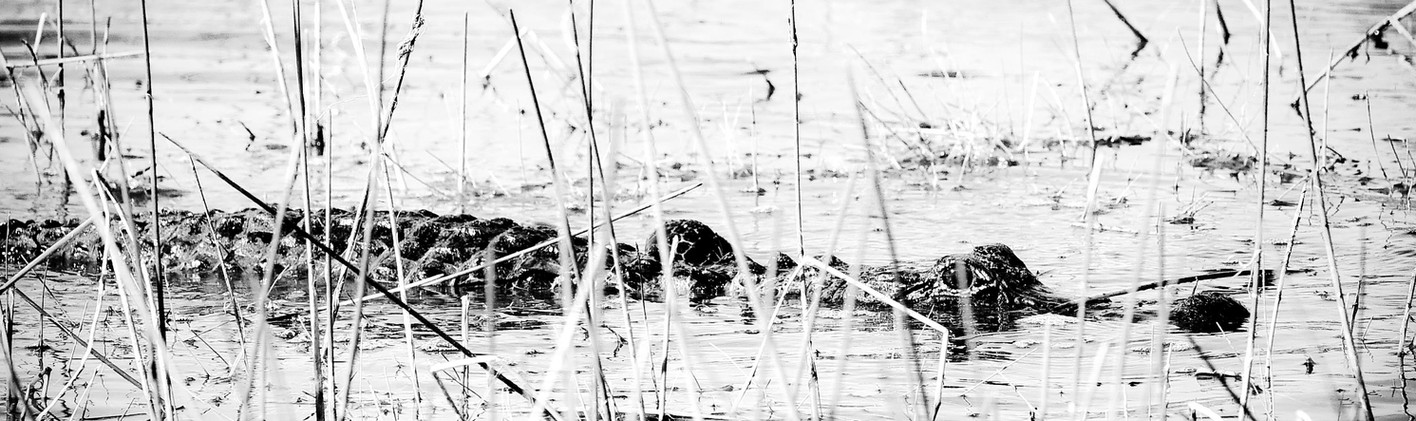 Everglades-4.jpg