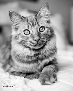 Coco_cat-29