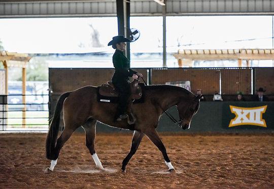 Baylor Equestrian