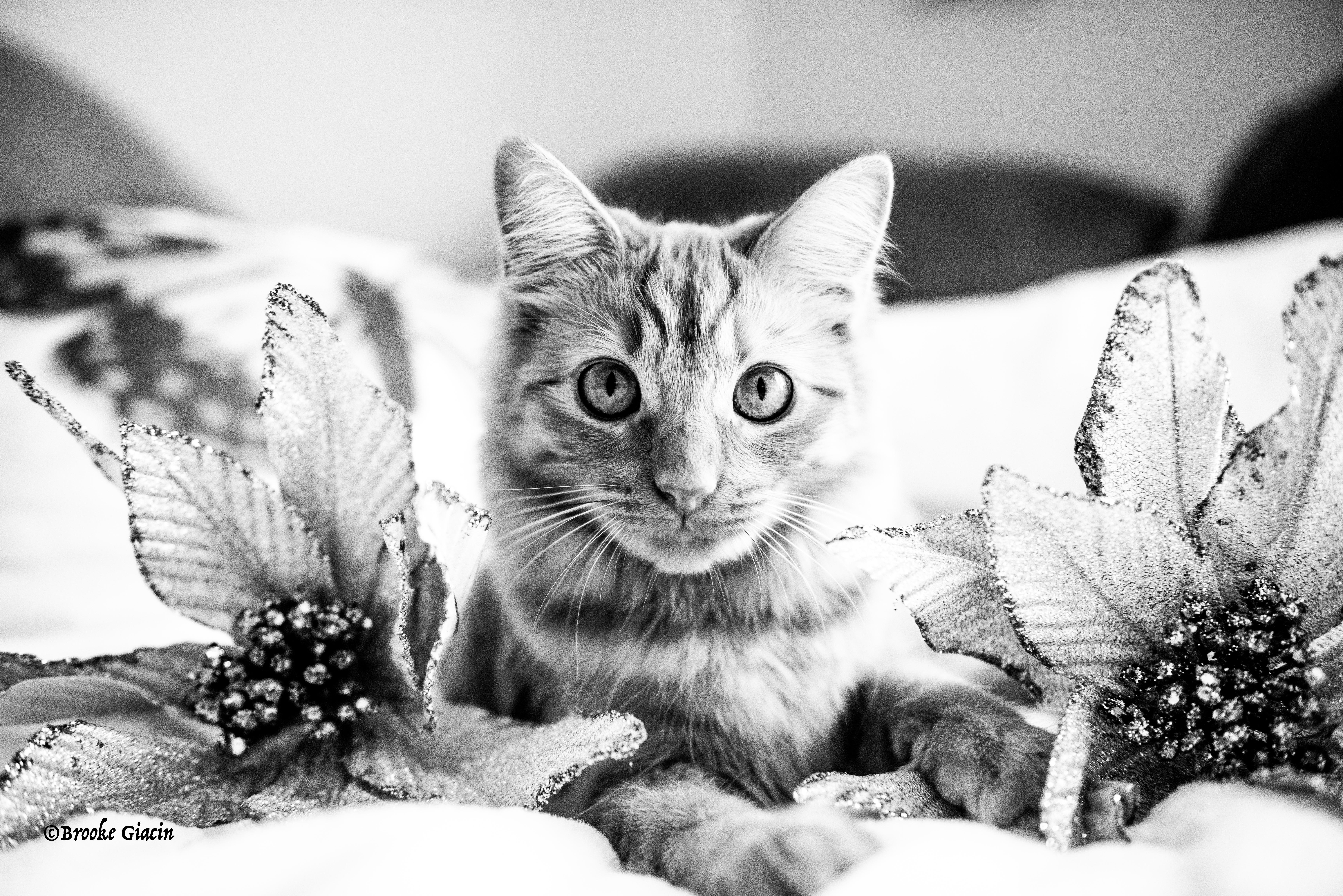 Coco_cat-46