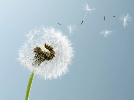 Mindfulness and Beauty