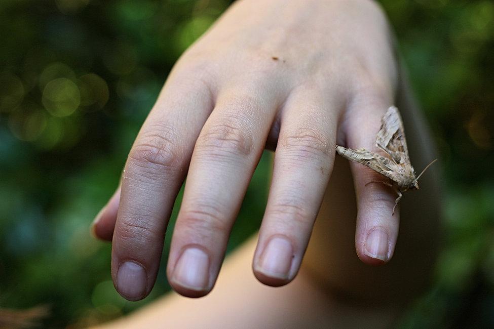 30_MOTH_NATURE_Yoga_hand_moth_bokeh__Sar