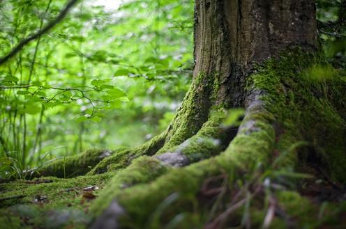 Grounding to root