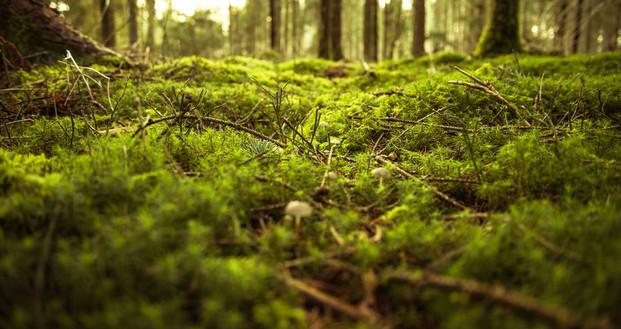 Soft moss ground