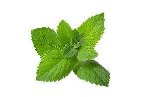 Mint Stock Image.jpg