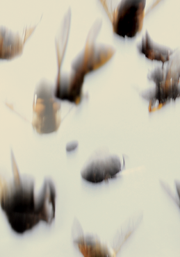 JVDM_chute 5.tif