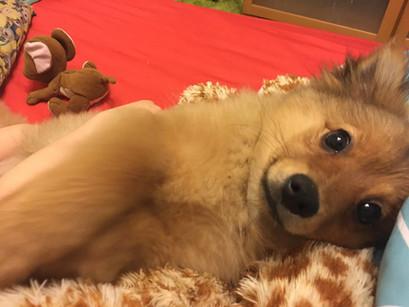 Talált kutyus-a leggyorsabb örökbefogadás története
