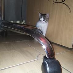 Horgász cica