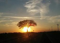 The Viroqua Tree