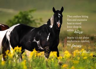 HorsesBlissMemeF.jpg
