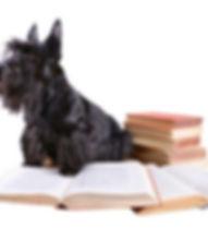 dog-training-classes_edited.jpg