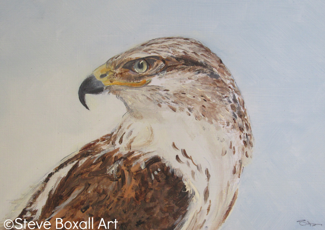 Red Tailed Buzzard