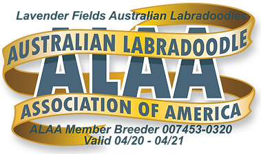 ALAA Member Logo.png