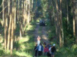 Caminha Ecológica - Jippe