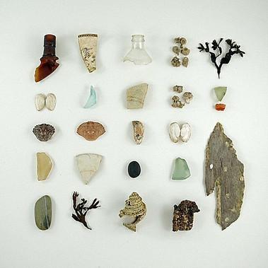 curiosity-cabinet-specimens.png1.jpg