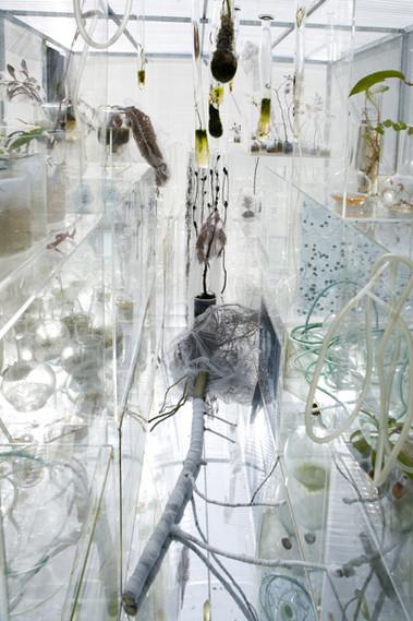 Janet-Lawrence-Royal-botanic-Gardens21.j