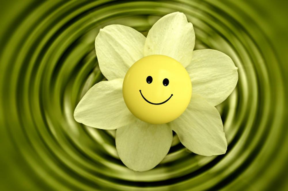 blossom-233838_1920
