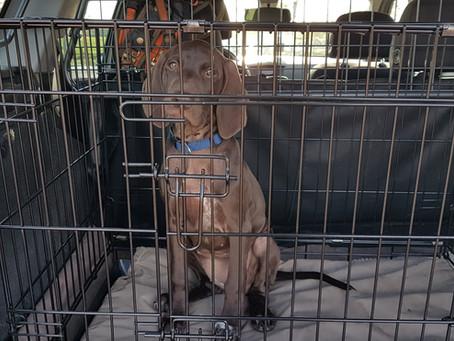 Als pup wagenziek geweest Deel 1
