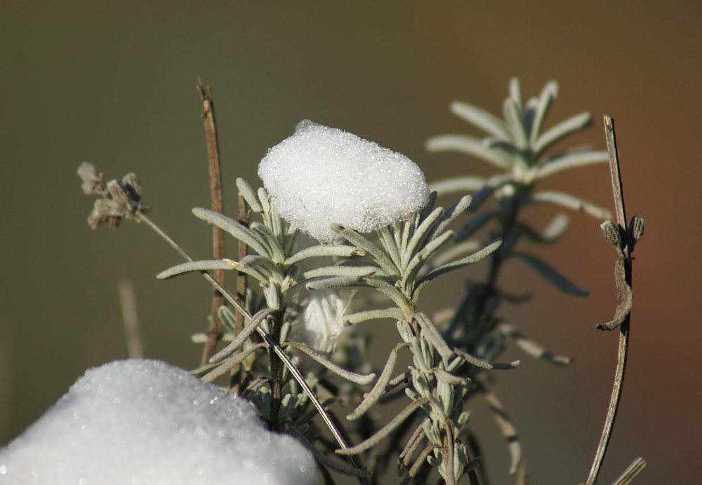Winter 2021 - in de tuin !