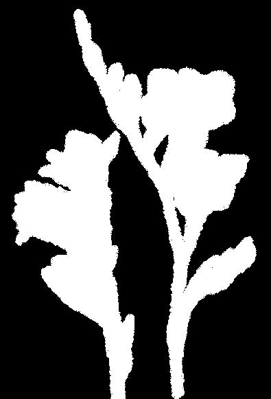 botanix 1 brighter in white.png