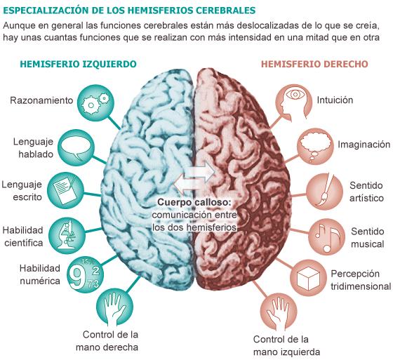 Ejercicios para estimular ambos hemisferios