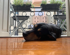 SEED ATHENS a place even your paw wants to join