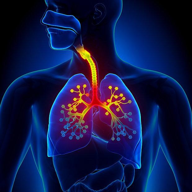Lung image.jpg