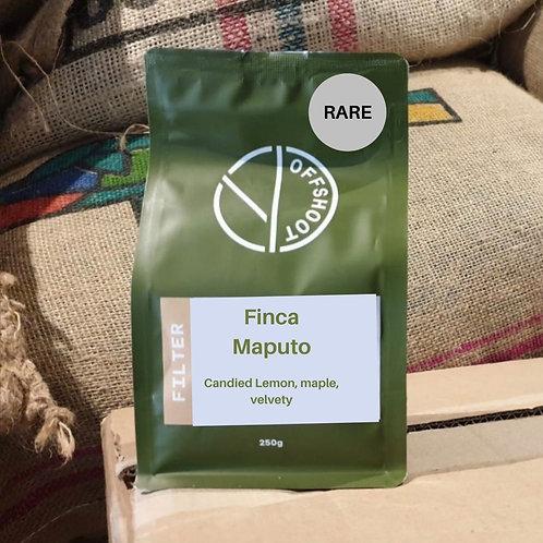 Finca Maputo - RARE - Filter