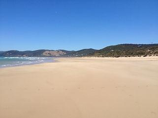 Moggs Beach Mar 13 078.jpg
