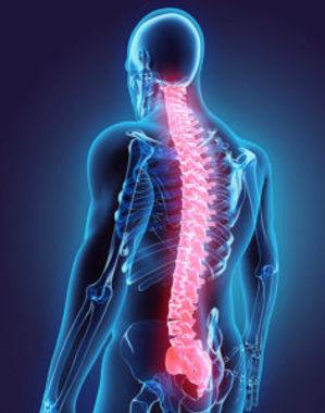 spinal-cord-injury-236x300.jpg