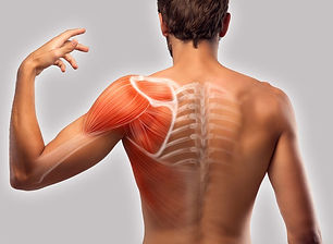 shoulder-blade-muscle-pain-hand-muscle-p