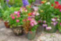 summer-blooms-terracotta-pots.jpg