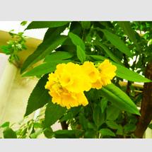 Sourav Bag_ The beauty of flowers_ 81673