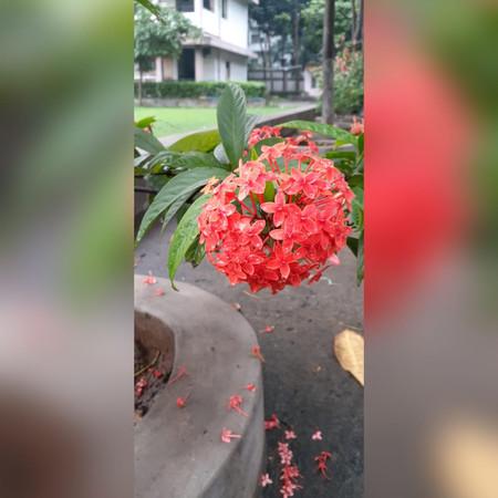 AbhishekKumarSinha_Flower2_8252771180 -