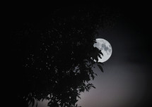 Soubhik Ghosh _ Beauty Of Moon_810117016