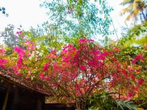 Sompadma Mukherjee_VibrantNature_9330480